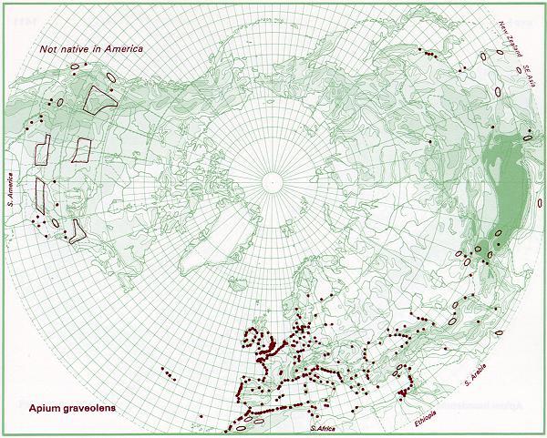 Sellerie Verbreitung auf der Nordhalbkugel (Eric Hultén via Wikipedia)